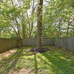 back yard tree